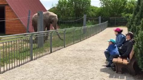 Wille-Kinderzoo - Rundgang durch den Wille-Kinderzoo