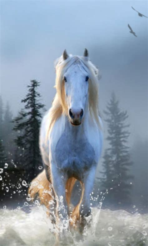 Free Horse Wallpapers app APK Download For Android | GetJar