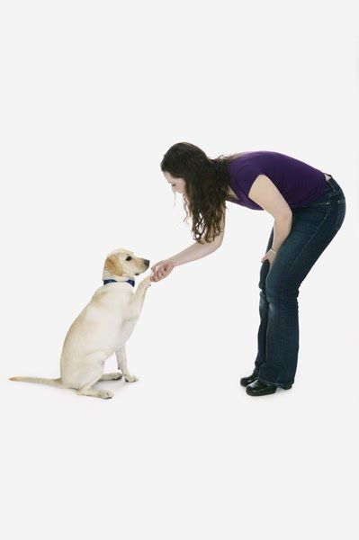 What Does It Mean When Your Dog's Paw Is Extended Towards