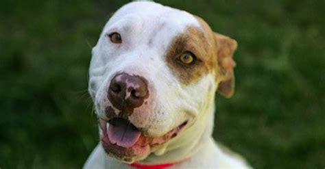 They Finally Found A Missing Boy - With A Hero Pit Bull By